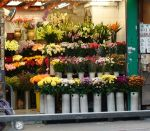686px-FlowerShop_ShangHaiStreet_HK