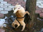 urine-dog-pee-upside-down