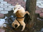 urine-dog-pee-upside-down