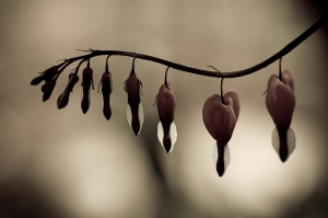 tumblr-broken-heart-photography-broken-heart-3-by-mv79-on-deviantart--photos