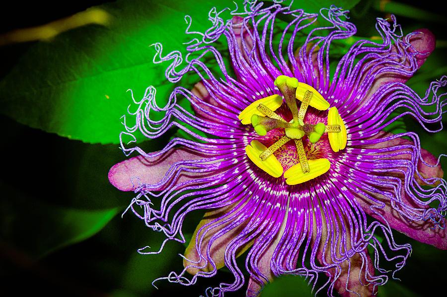 exotic  qbgtilted tiara, Beautiful flower