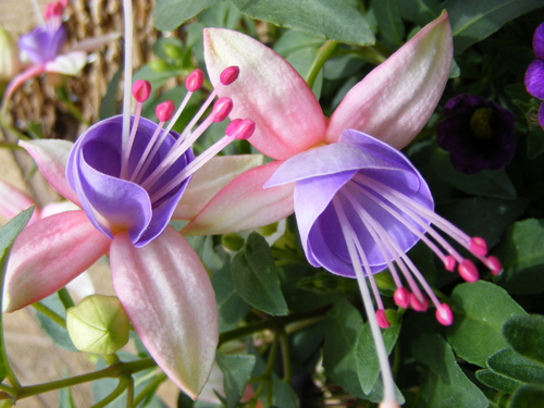 exotic women  qbgtilted tiara, Beautiful flower